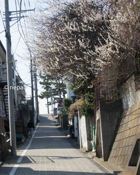 DSC_2289久保山の坂ロゴ入り.jpg