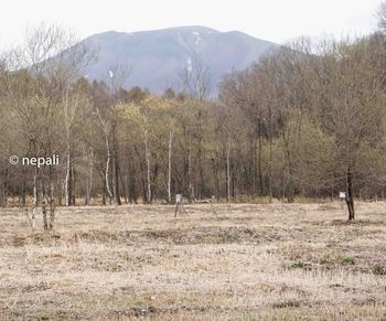 DSC_2399浅間山.jpg