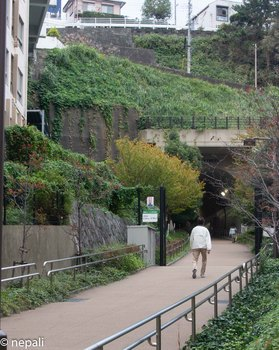 DSC_3007東横フラワー緑道.jpg