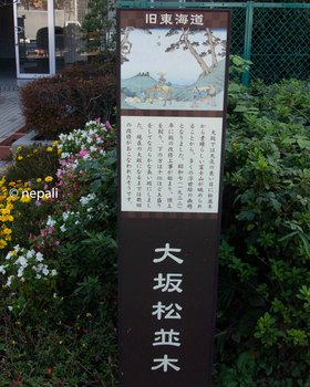 DSC_3160大坂松並木.jpg