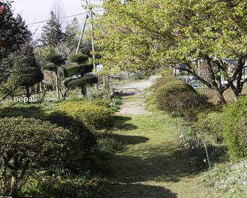 DSC_3820農家の庭先.jpg