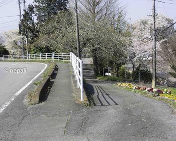 DSC_3876旧道入口.jpg