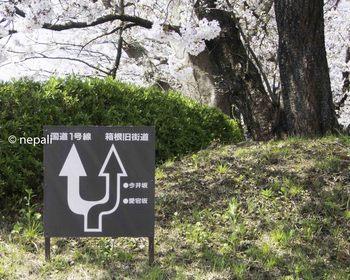 DSC_3923愛宕坂入口.jpg