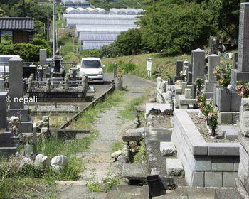 DSC_4108墓地.jpg