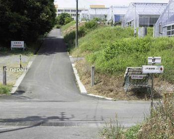 DSC_4112白髭神社.jpg
