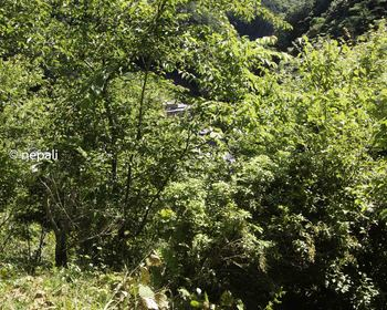 DSC_4396木が茂って宇津ノ谷が見えない.jpg