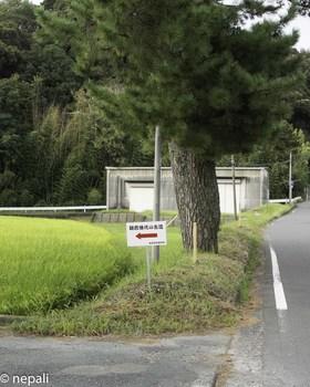DSC_4973鎌倉時代の古道.jpg