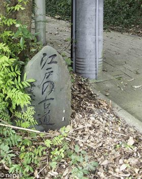 DSC_4978江戸の古道.jpg