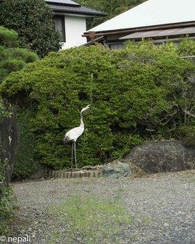 DSC_4983民家に鶴.jpg