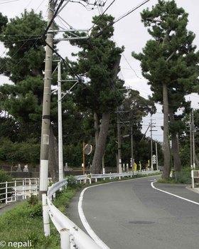 DSC_4985松並木.jpg