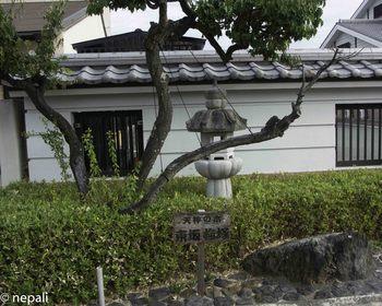 DSC_4999天神の木東坂梅塚.jpg