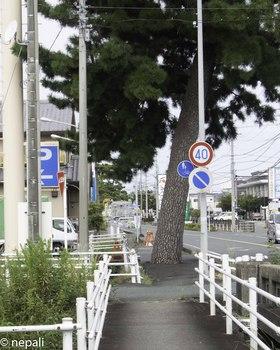 DSC_5039豊田川.jpg