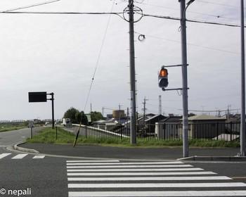 DSC_5056道を渡る.jpg