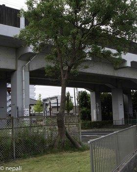 DSC_5107東海道本線ガード.jpg