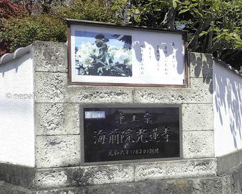 P4130203光蓮寺.jpg